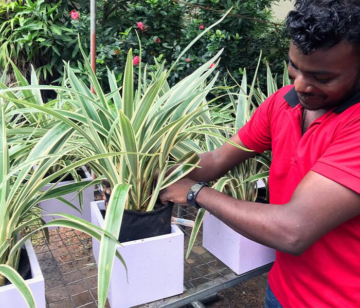 Sri lanka, Skygrow, Skytech Engineering, Growbags