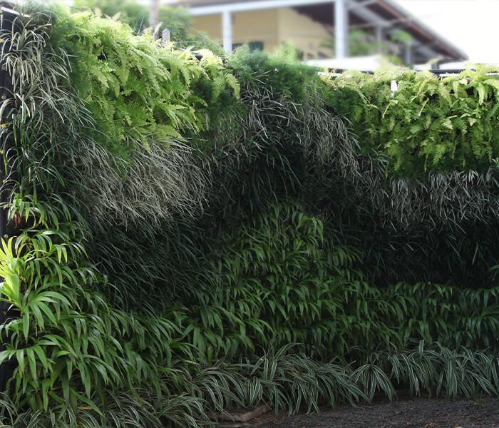 sri lanka, Skygrow, Skytech Engineering, vertical garden, Green wall