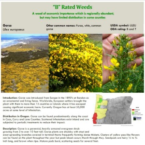 B-Rated Weeds, Oregon Dept. of Agriculture