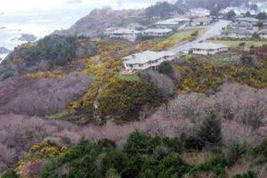 Harris Beach Gorse Removal_Dawson
