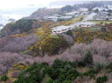Before: Harris Beach Gorse Removal