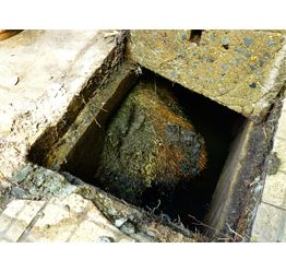 Sewer Root Removal Services