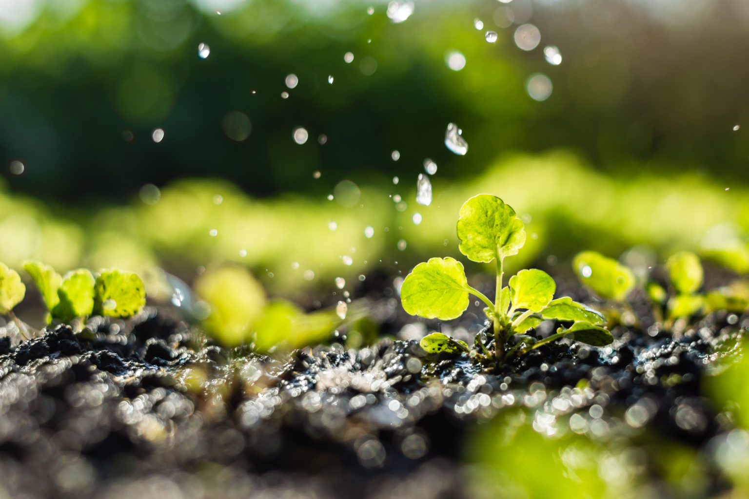 Thinking About Irrigation? Here's Why You Should.