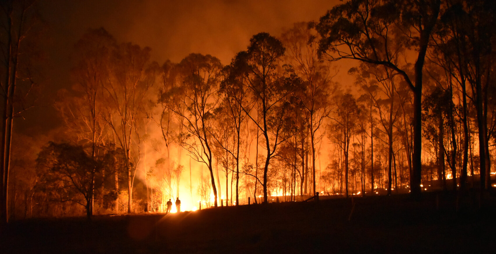 Get Ready For Bushfire Season: A Step By Step Guide