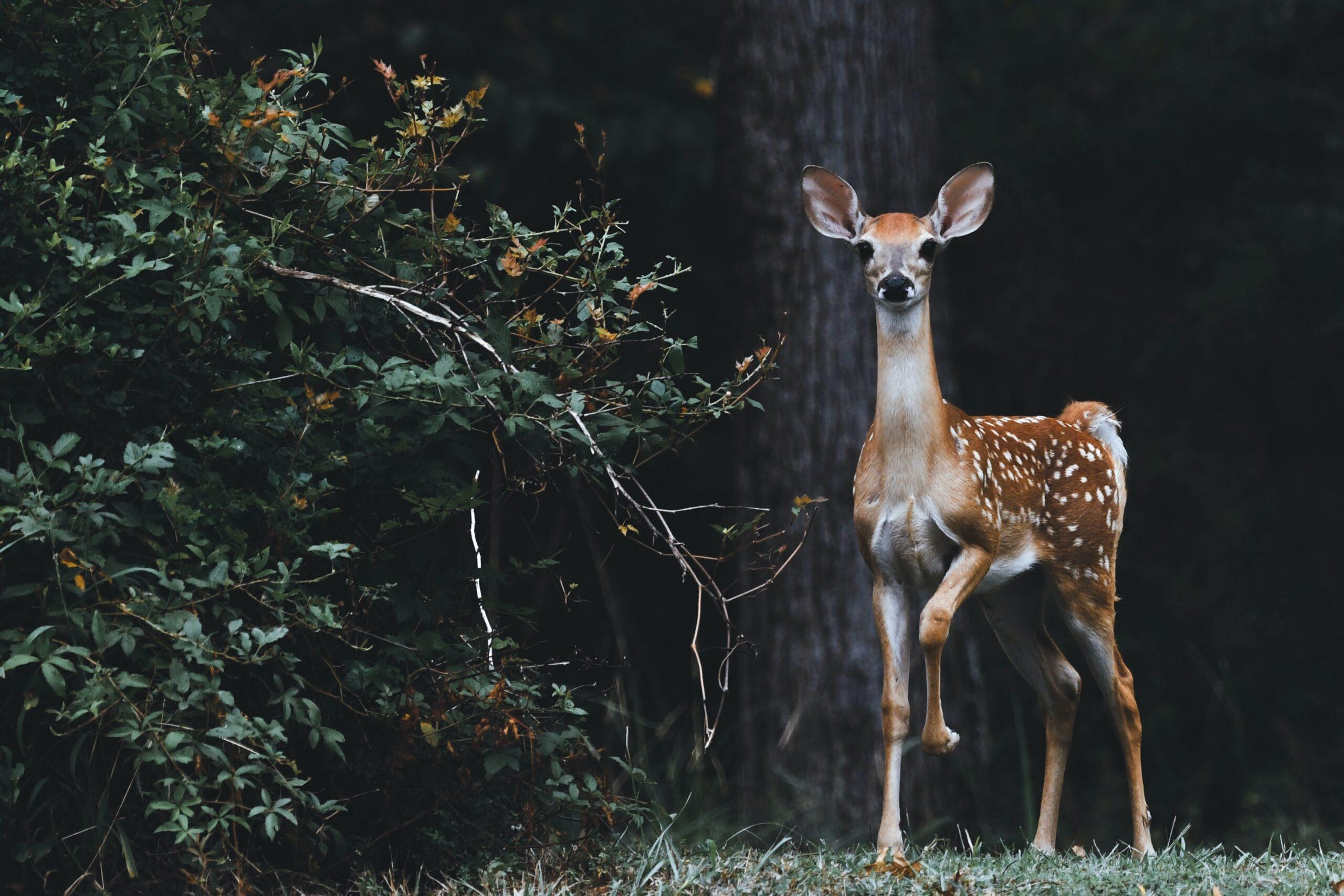 landpass best deer hunting province in canada
