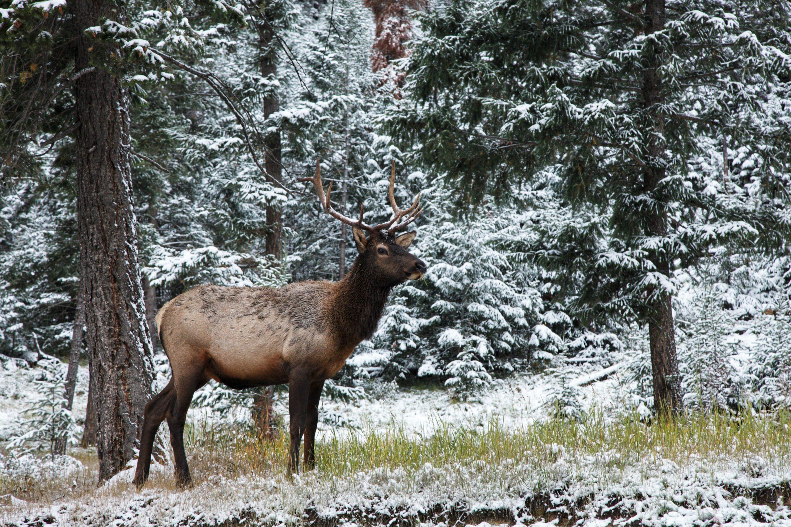 landpass big game hunting tips