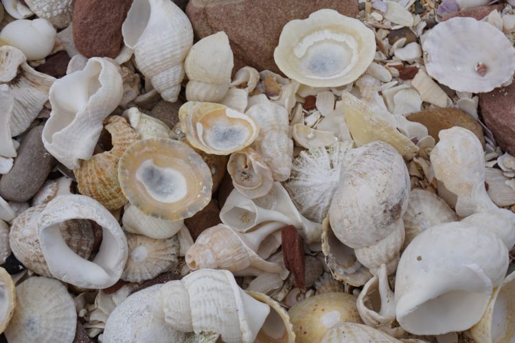 Sea Shell Hunting on the Scottish Coast