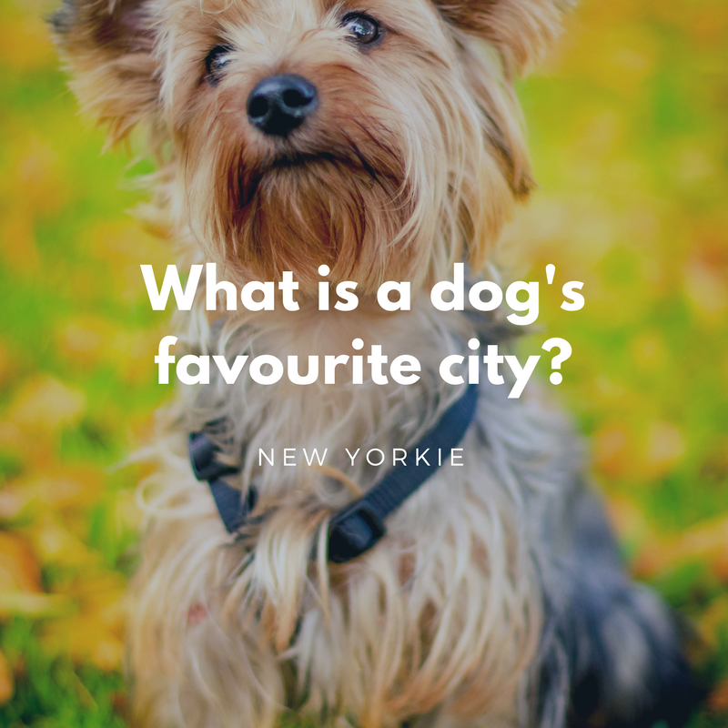 Dogs favorite city dad jokes