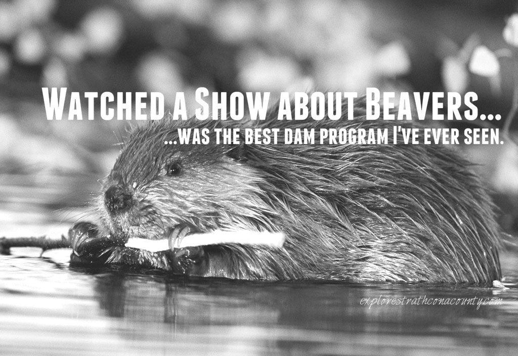 Beaver joke bad dad joke