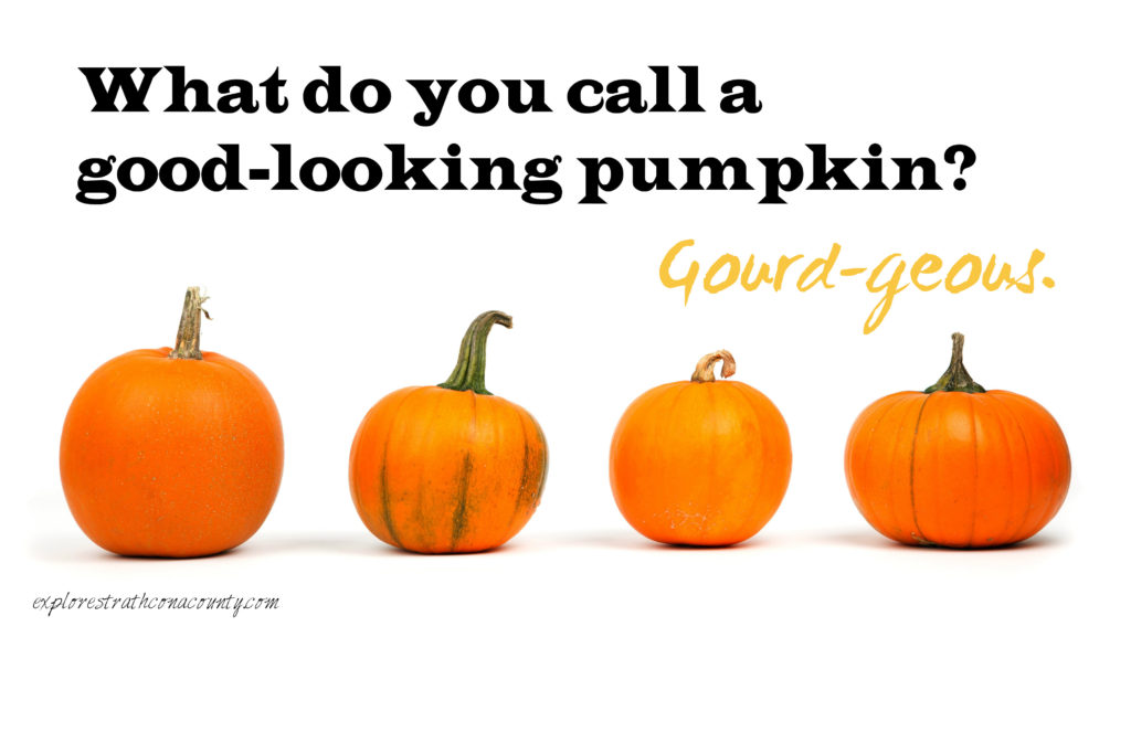 pumpkin joke sherwood park