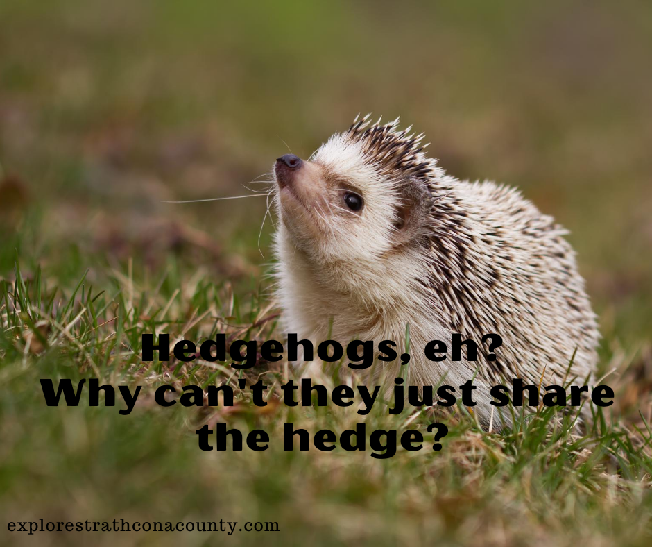 Hedgehog dad joke