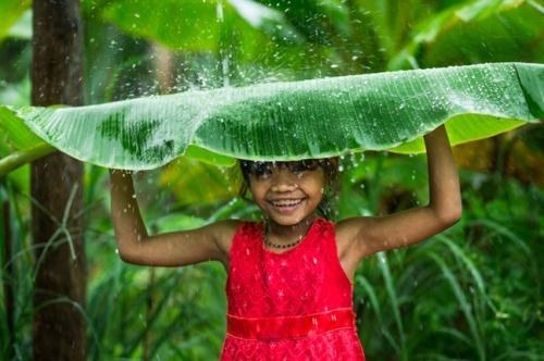 natural-umbrella_1188936