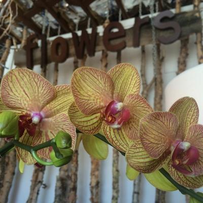 Just Priceless Creative Floral Studio