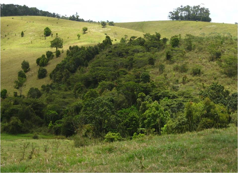 Biodiversity plantings speed up forest recovery in Australian rainforests