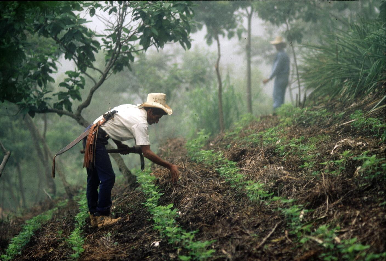 The Forest and Landscape Restoration Mechanism
