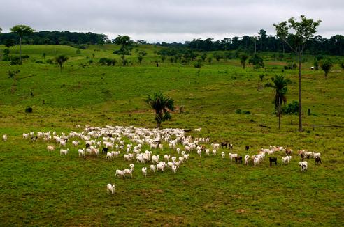 Natural regeneration for sustainable development