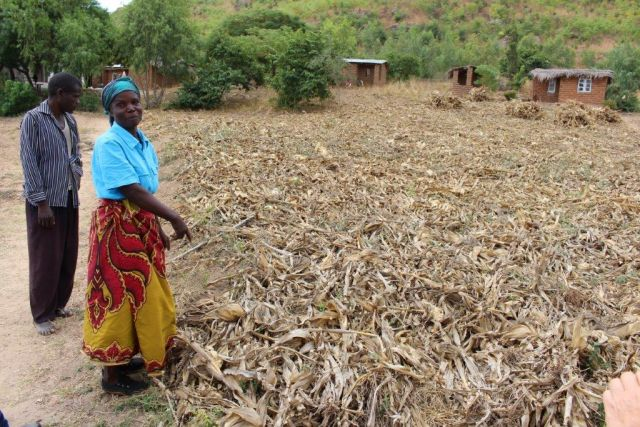 Can We Restore 350 Million Hectares by 2030?