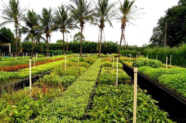 Ecological Restoration Plans in Latin America