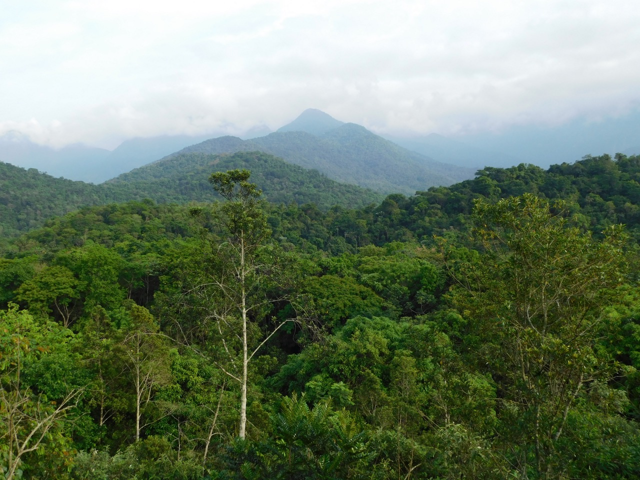 Bringing Forth the Earth's Rainforests
