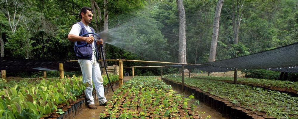 plant a million trees