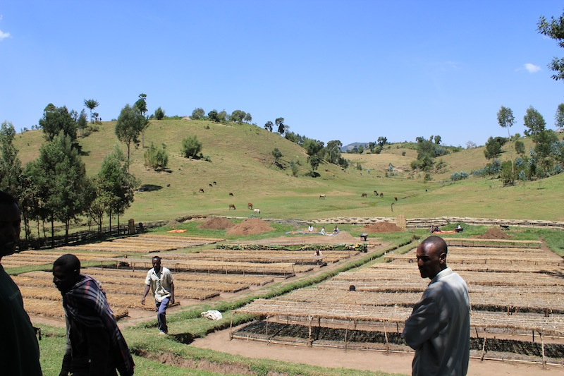 Tree nursery for reforestation in Teshone, Ethiopia (Photo: WeForest)