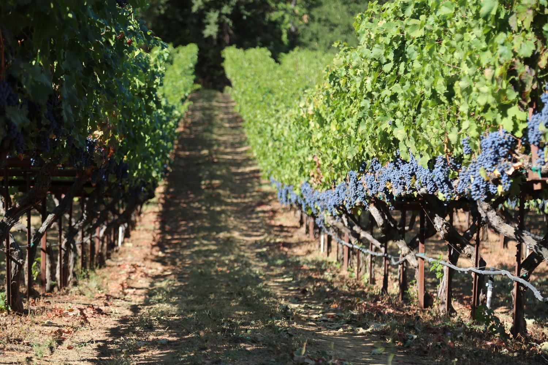 image winery
