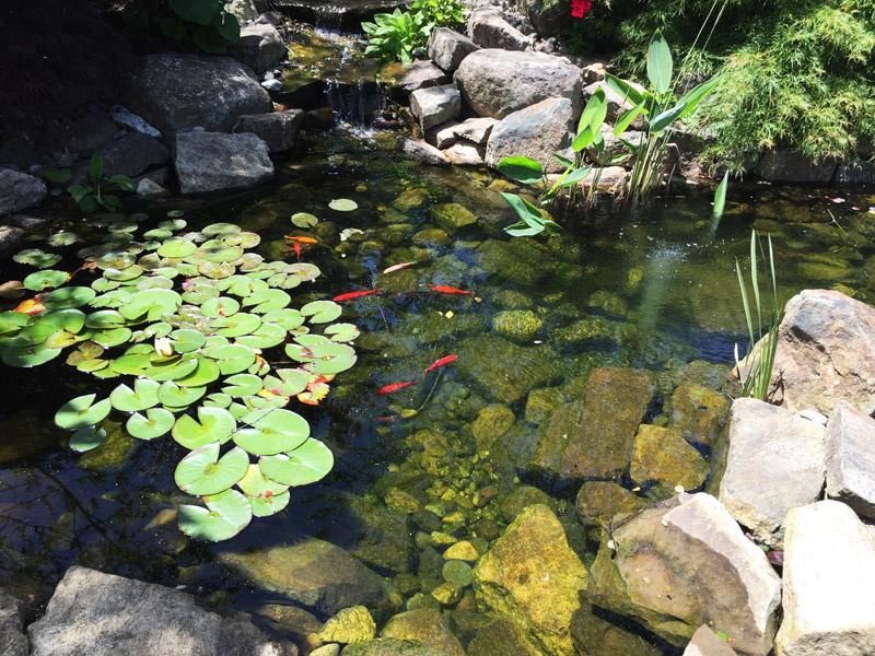 Koi Pond Installation, Randolph New Jersey