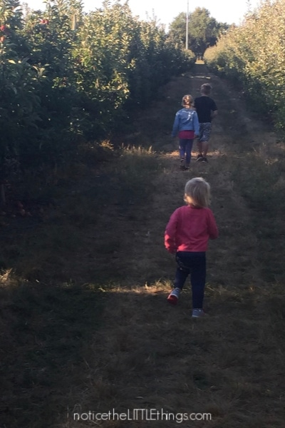 tuttle orchard apple picking