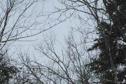 2018-03-10 Porcupine Trail 2