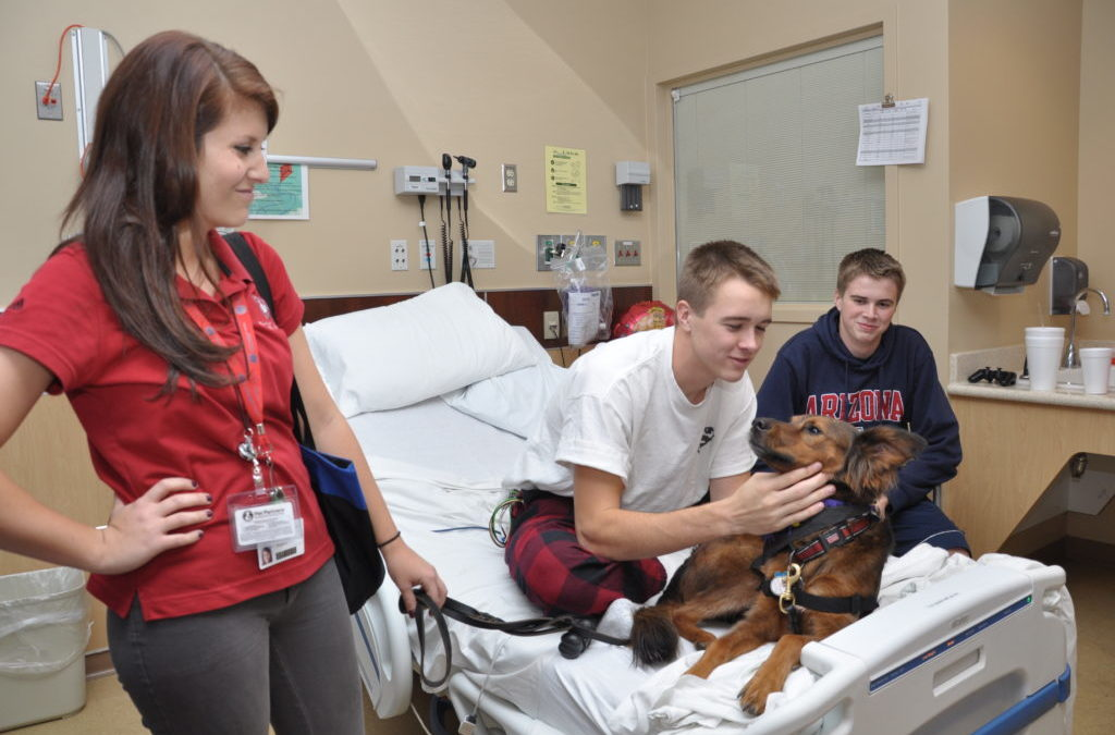 How to Become a Therapy Dog Team