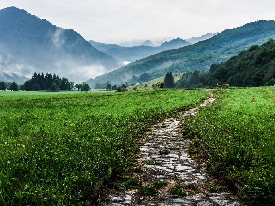 gray and white pathway between green plants on vast valley