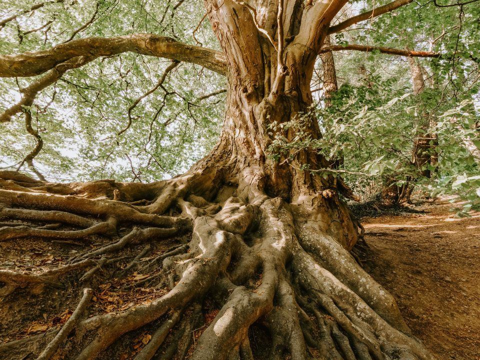 green tree during daytime