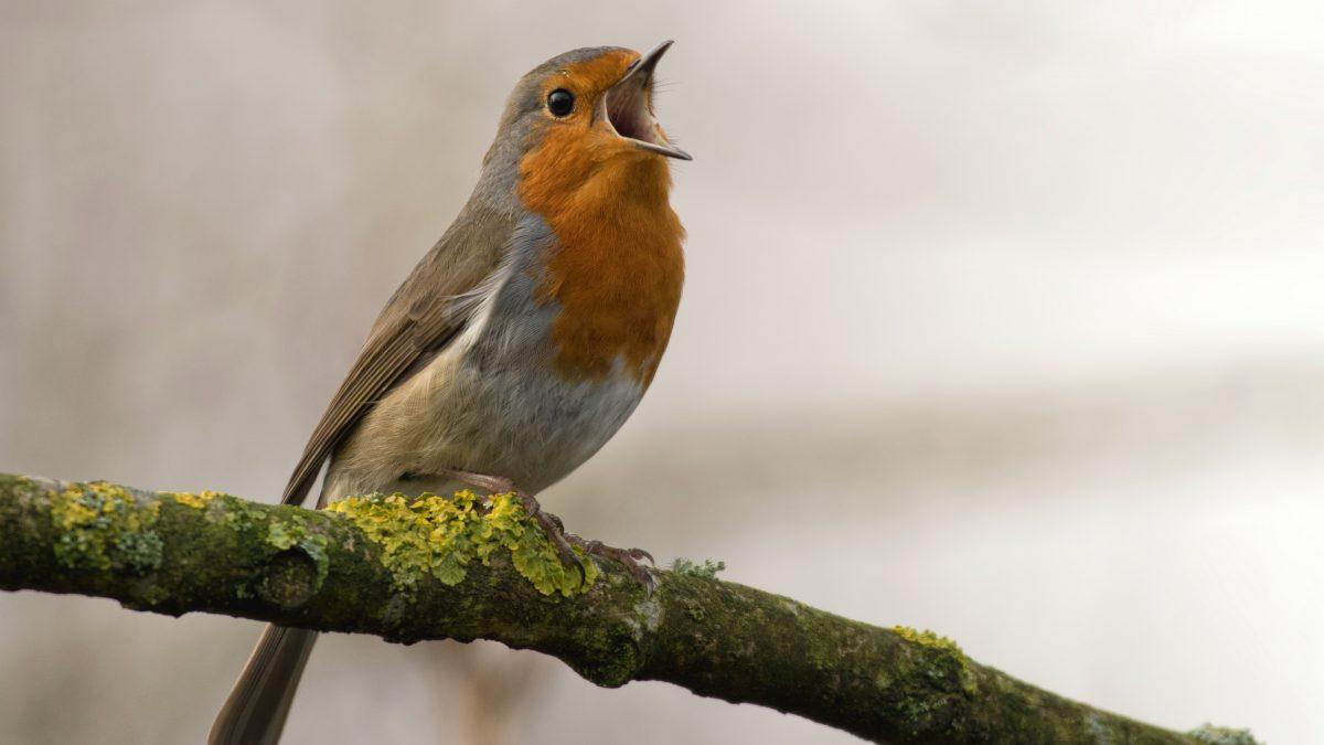 bird singing on tree