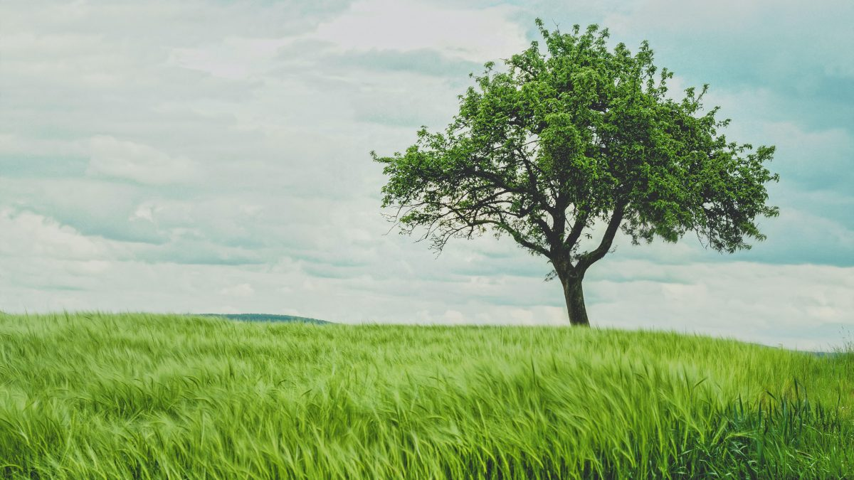 green tree on grassland during daytime