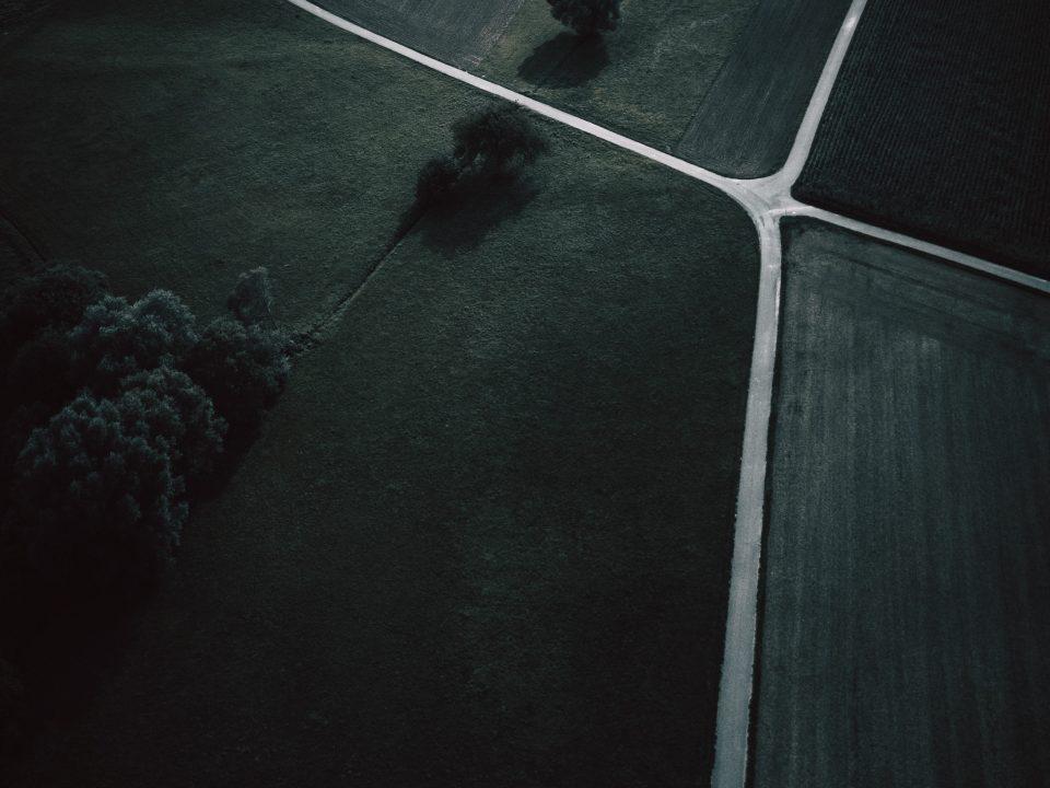 bird's eye view photo of green trees