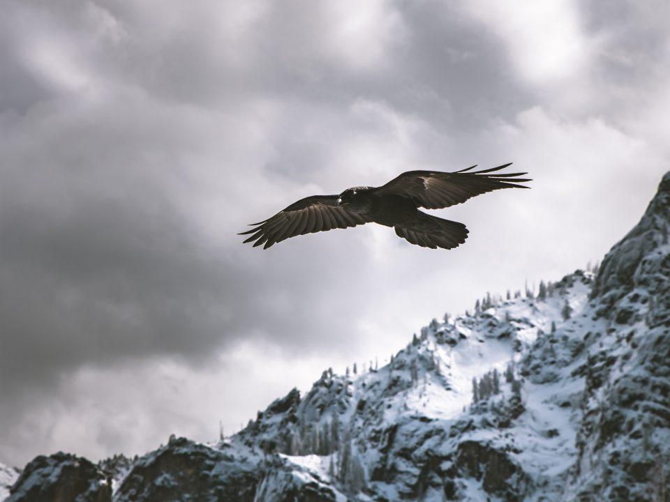 white and brown bird near mountain
