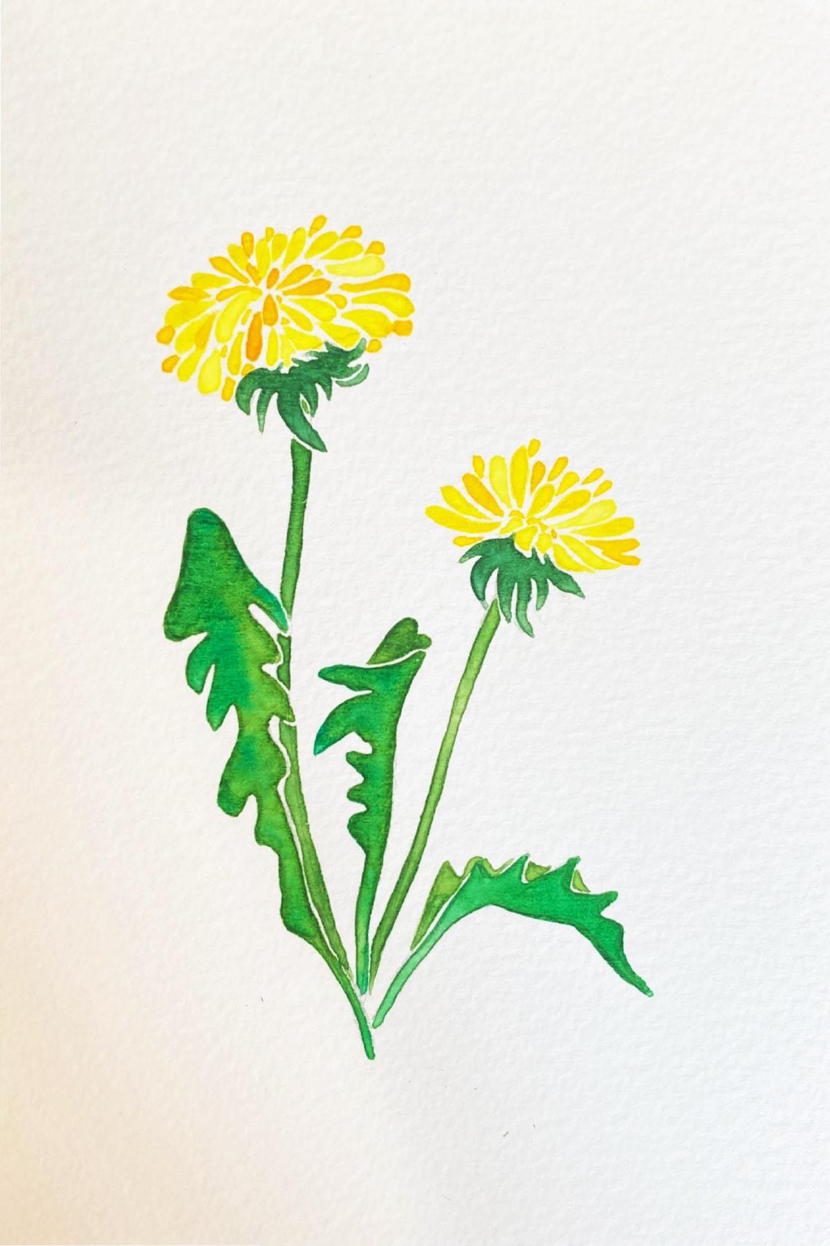 dandelion-min