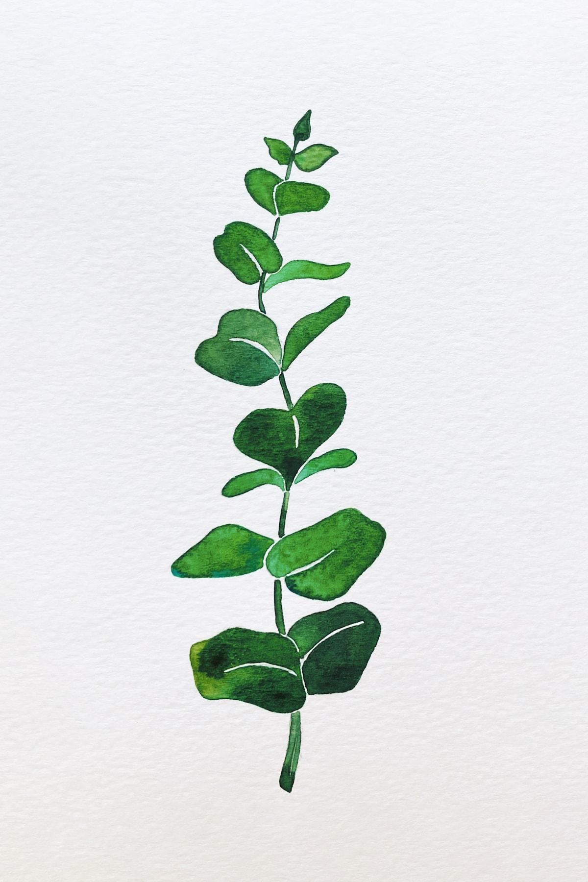 eucalyptus 1-min