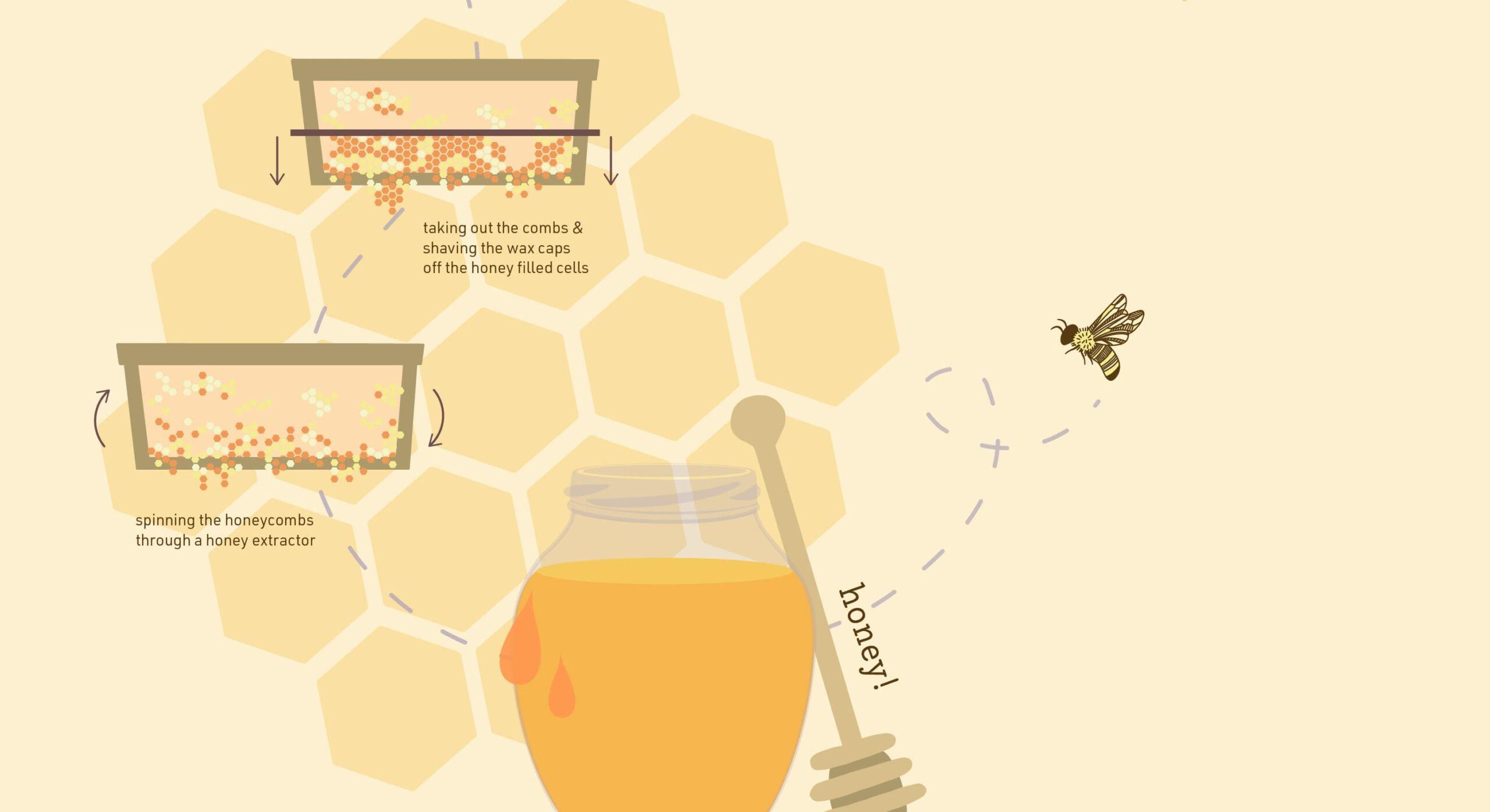 honey-making-crop 2-min
