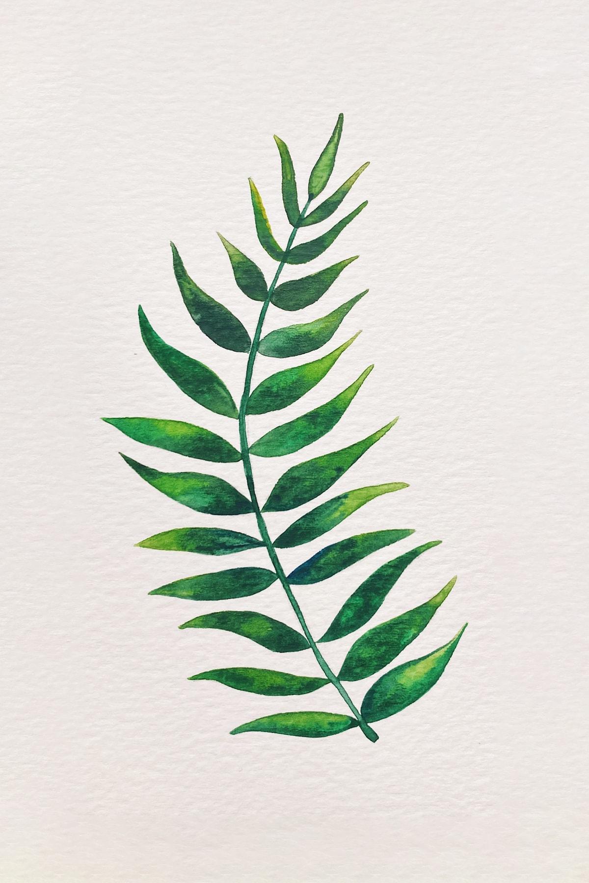 palm leaf 3-min