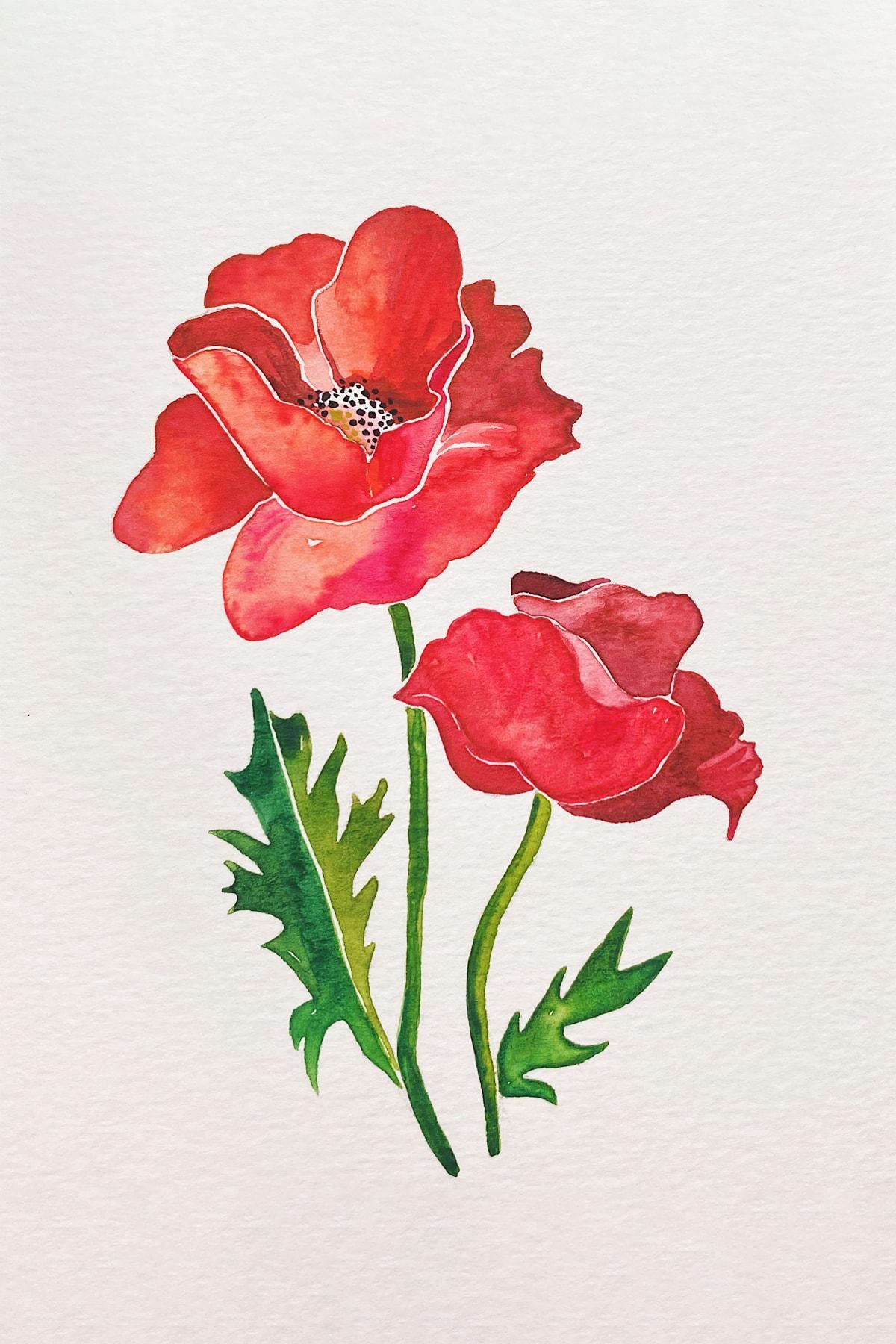 poppy-red-min