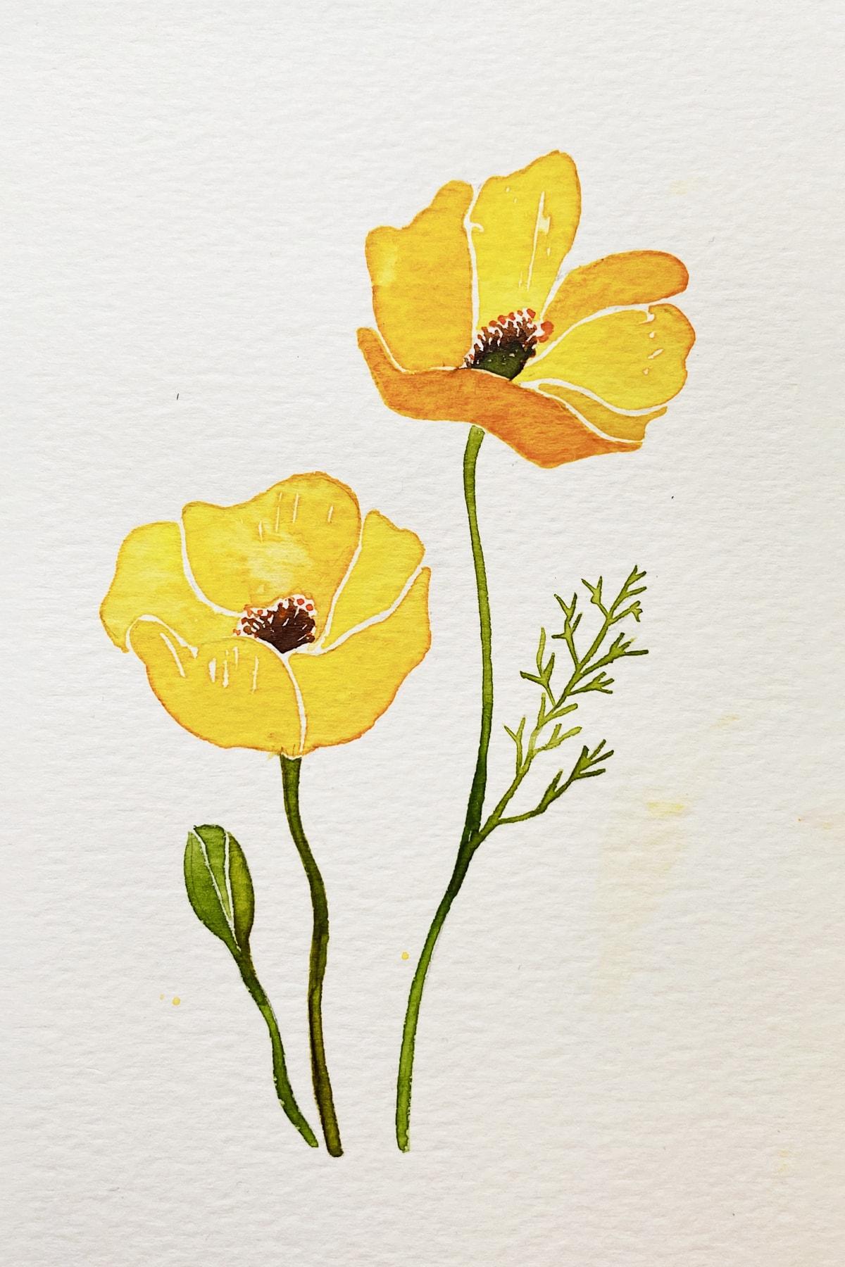 poppy-yellow-min