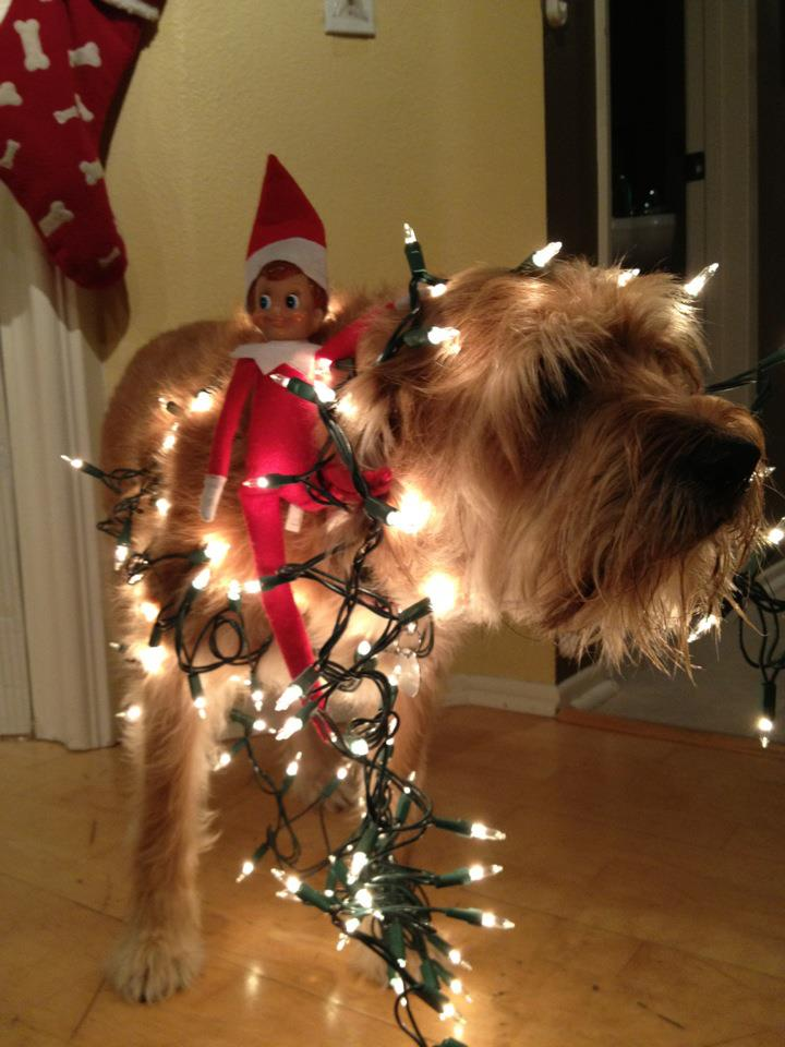 elf-and-dog-tangled-in-lights
