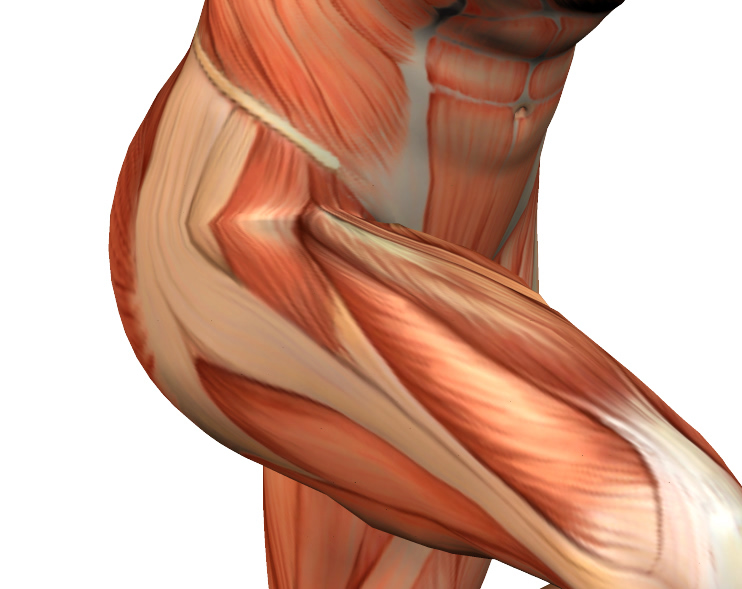 Muscle Spotlight: The Glutes