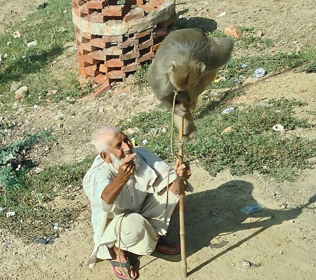 old man with monkey tricks