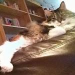 Penelope reclining