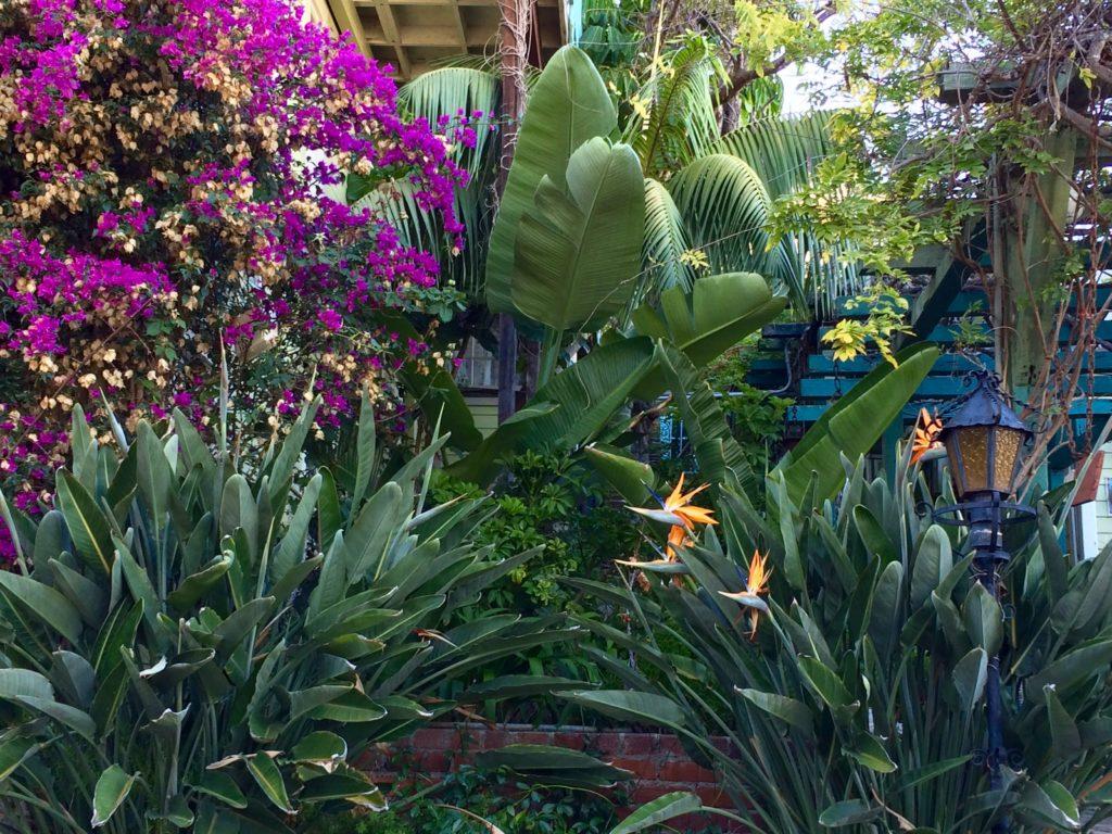 Gardens of La Paloma Los Flores