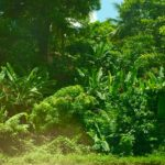 Vegetation changing with elevation