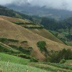 Constanza farmlands