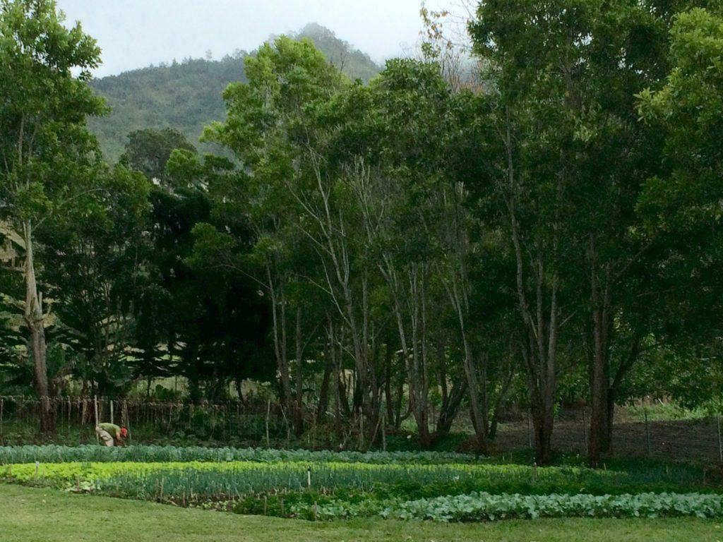 Garden-to-table at Altocerras Villas
